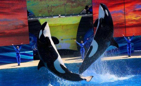 Sea World Brand Strategy